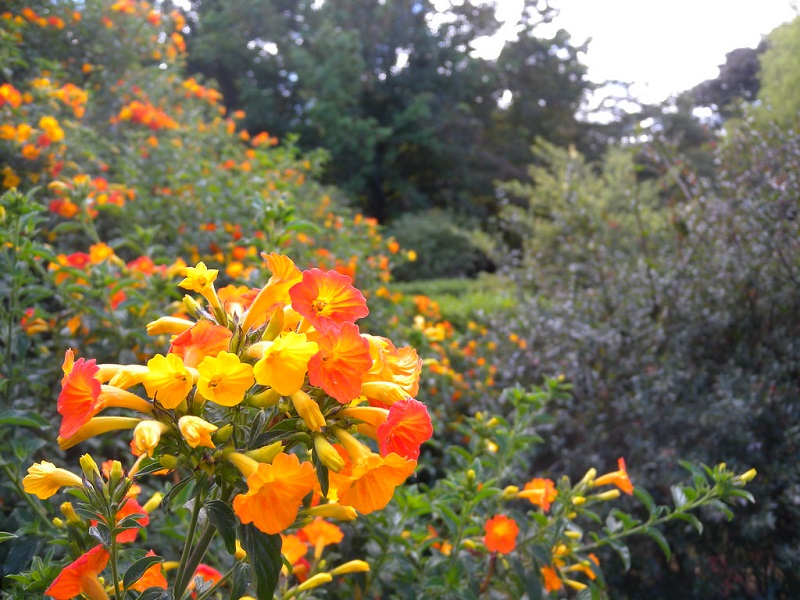 Flores do Jardim Botânico de Bogotá